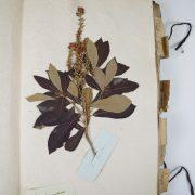 Atelier dessin 6-12 ans «Mon carnet de collectionneur»