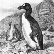 Une soirée au musée «Le grand pingouin»